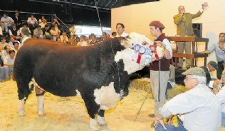 Hereford de Oholeguy a US$ 32.000